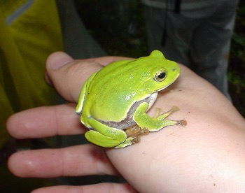 農業生物多様性:カエル類、湿生、水性生物、オオサンショウウオなど